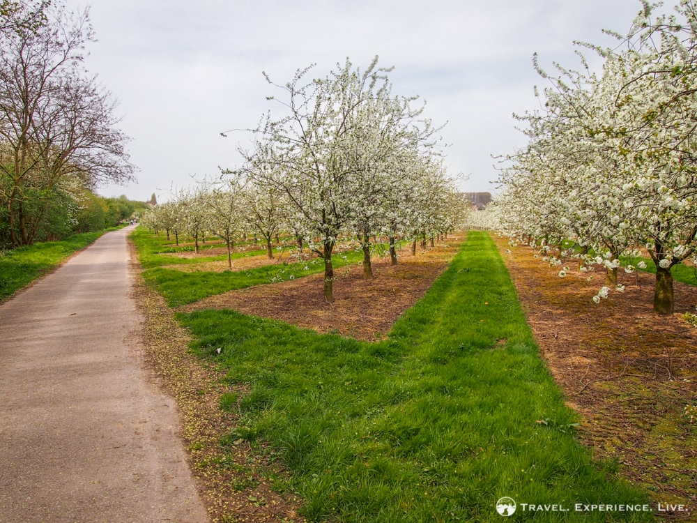 Spring Travel Idea: The Orchards of Haspengouw, Belgium