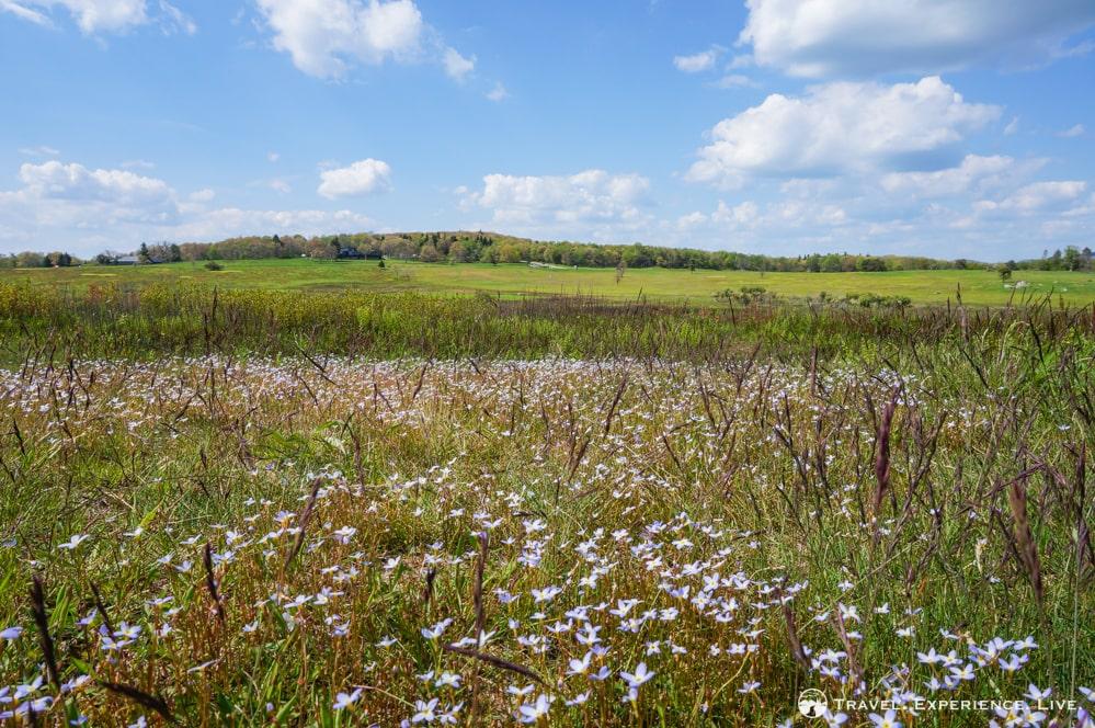 A Walk in Big Meadows, Shenandoah National Park