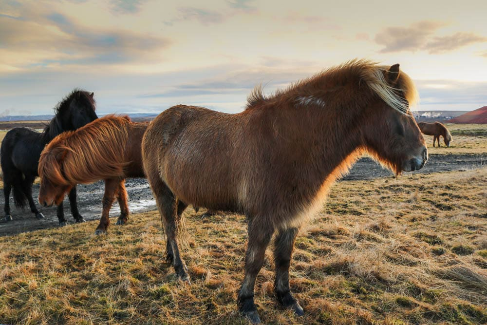 From Waterfalls and Icefields to Snow and Steam – An Iceland Photo Essay