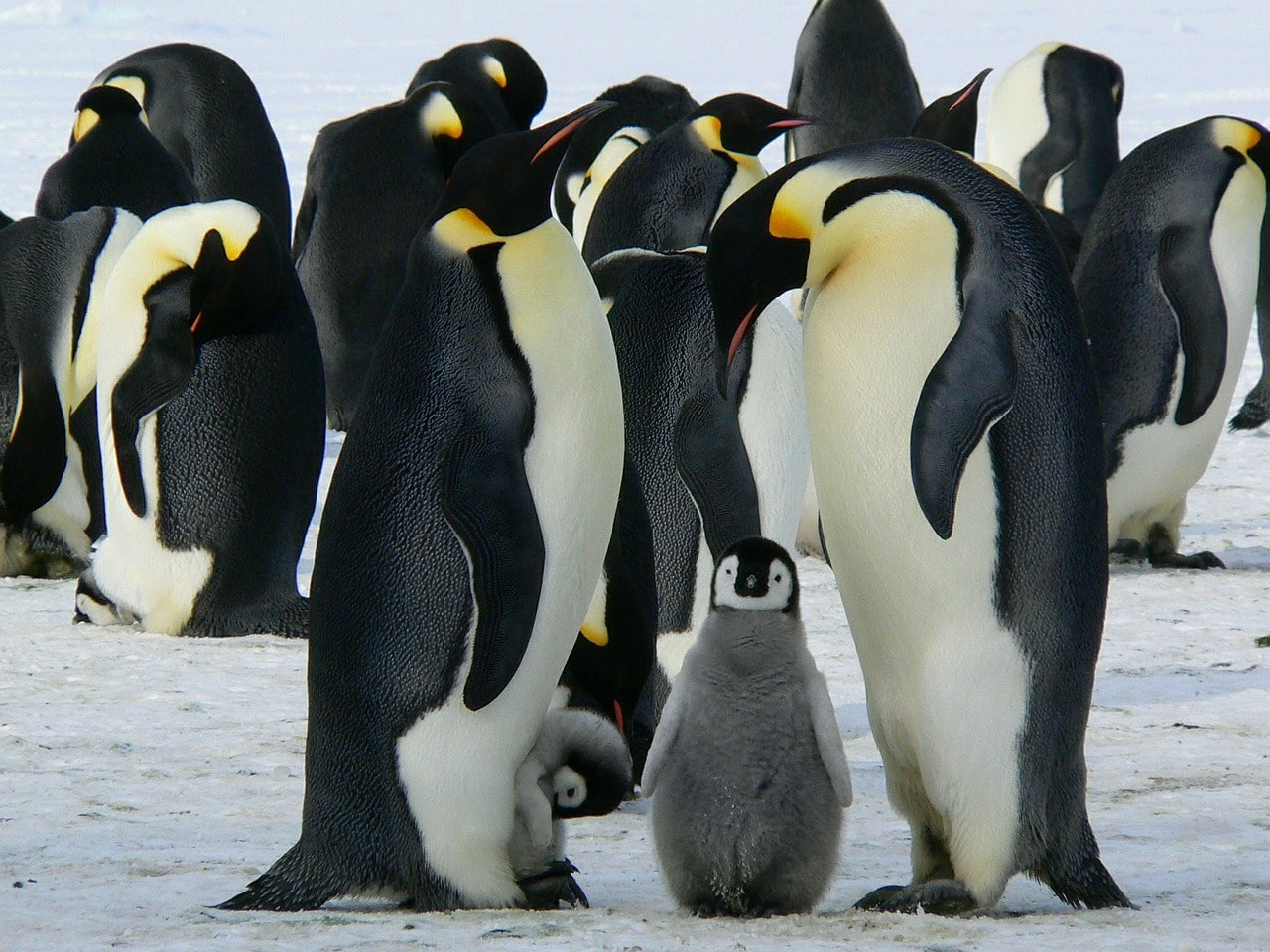 Antarctica: Be Prepared for Penguin Smell