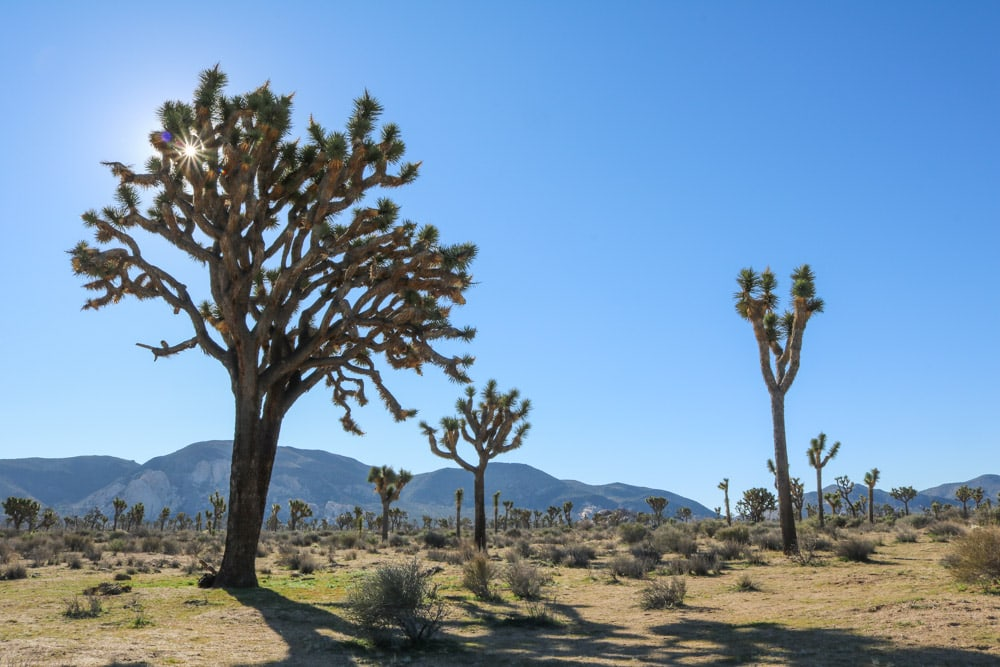 7 Recommended Hikes in Joshua Tree National Park, California