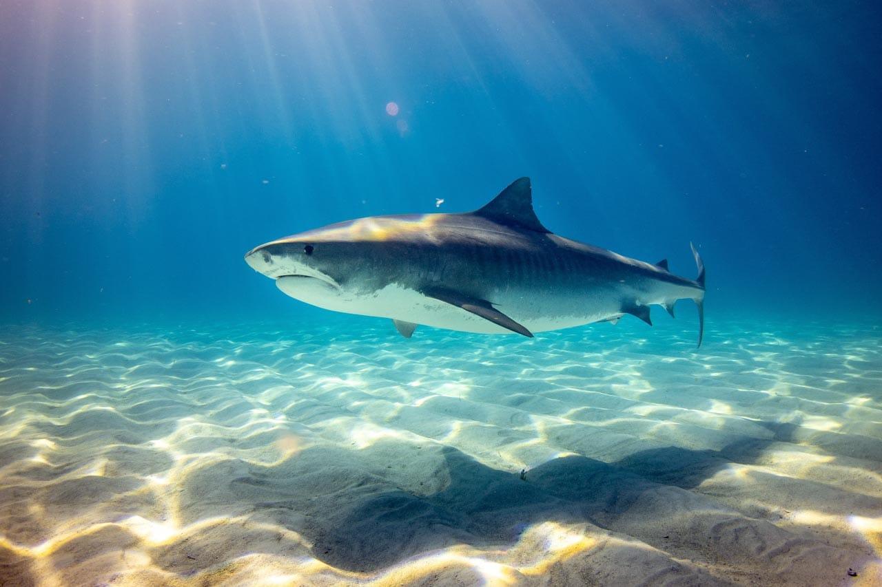Sharking tumblr